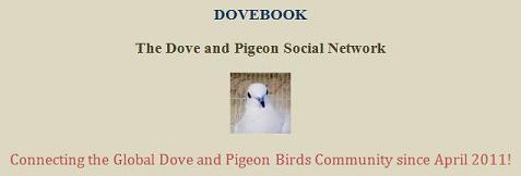 dovebook.webs.com
